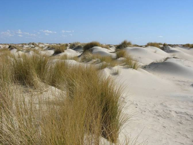 jonge duinen op texel.44c9d104